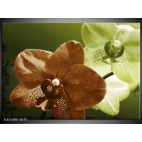 Glas schilderij Orchidee | Groen, Bruin, Wit