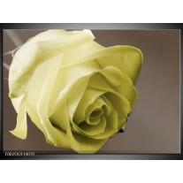 Foto canvas schilderij Roos | Groen, Wit, Grijs