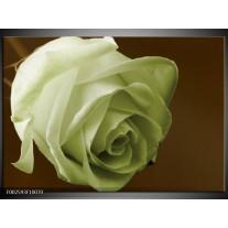 Foto canvas schilderij Roos | Groen, Wit, Bruin