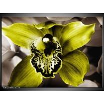 Foto canvas schilderij Iris | Groen, Wit, Grijs