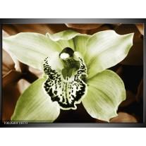 Foto canvas schilderij Iris | Groen, Bruin, Wit