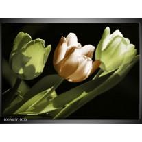 Foto canvas schilderij Tulp   Bruin, Groen, Zwart