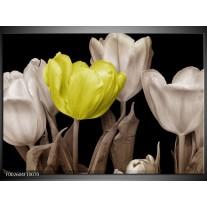 Glas schilderij Tulp   Groen, Grijs, Zwart