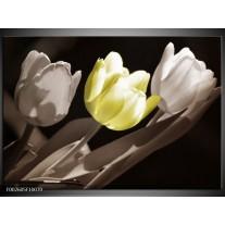 Glas schilderij Tulp | Groen, Grijs, Zwart