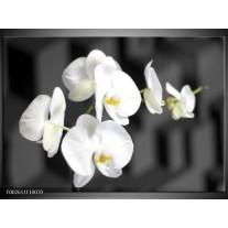Glas schilderij Orchidee | Zwart, Wit, Grijs