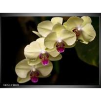 Glas schilderij Orchidee | Geel, Paars, Zwart