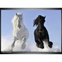 Foto canvas schilderij Paarden   Wit, Zwart, Blauw