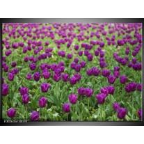 Glas schilderij Tulpen | Paars, Groen