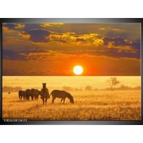 Foto canvas schilderij Zebra | Geel, Oranje, Wit