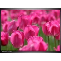 Glas schilderij Tulp | Roze, Groen