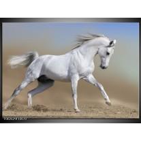 Glas schilderij Paard | Wit, Grijs
