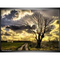 Glas schilderij Natuur   Grijs, Geel, Zwart