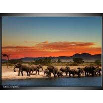 Foto canvas schilderij Olifant | Oranje, Grijs, Blauw