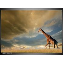 Glas schilderij Giraffe | Bruin, Grijs, Blauw