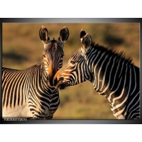Foto canvas schilderij Zebra | Zwart, Wit, Bruin