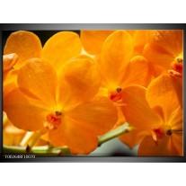 Glas schilderij Orchidee | Oranje, Geel