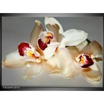 Foto canvas schilderij Orchidee   Wit, Grijs, Rood