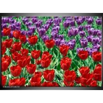 Glas schilderij Tulp | Rood, Paars, Groen