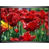 Glas schilderij Tulp | Rood, Groen, Geel