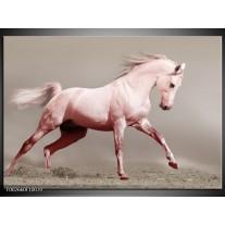 Glas schilderij Paard | Roze, Bruin, Grijs