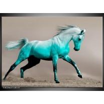 Glas schilderij Paard | Groen, Grijs