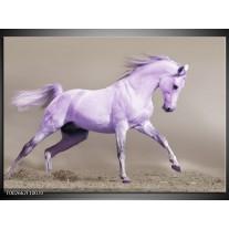 Glas schilderij Paard | Paars, Grijs