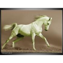 Glas schilderij Paard | Groen, Bruin