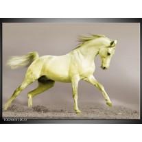 Foto canvas schilderij Paard | Groen, Grijs