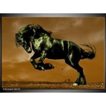 Glas schilderij Paard | Bruin, Groen, Zwart