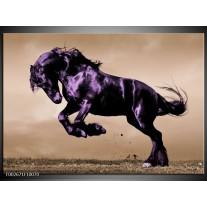 Glas schilderij Paard | Paars, Grijs, Zwart