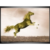 Foto canvas schilderij Paard | Sepia, Groen, Goud