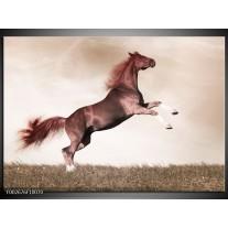 Glas schilderij Paard | Sepia, Bruin, Rood