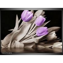 Glas schilderij Tulp | Paars, Zwart, Grijs
