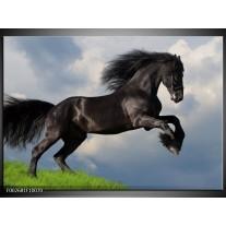 Glas schilderij Paard | Zwart, Groen, Wit