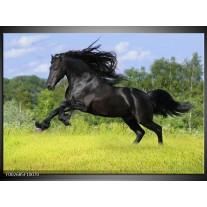 Foto canvas schilderij Paard | Zwart, Groen, Blauw