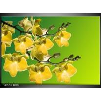 Glas schilderij Orchidee | Geel, Groen, Wit