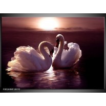 Glas schilderij Vogels | Wit, Bruin, Zwart