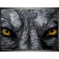 Foto canvas schilderij Dier | Grijs, Geel, Zwart