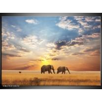 Glas schilderij Olifant | Grijs, Geel, Blauw