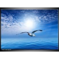 Glas schilderij Vogel | Wit, Blauw