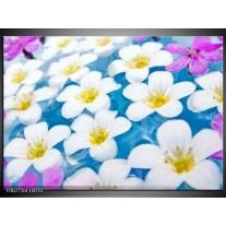 Glas schilderij Bloemen | Blauw, Wit, Geel