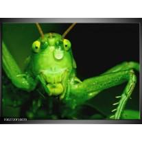 Glas schilderij Sprinkhaan | Groen, Zwart