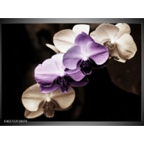 Glas schilderij Orchidee | Paars, Zwart, Grijs