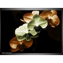 Foto canvas schilderij Orchidee | Groen, Bruin, Zwart