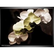 Glas schilderij Orchidee | Groen, Zwart, Grijs