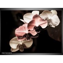Glas schilderij Orchidee | Bruin, Zwart, Grijs