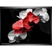 Glas schilderij Orchidee   Rood, Zwart, Grijs