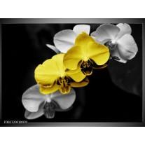 Glas schilderij Orchidee   Geel, Zwart, Grijs