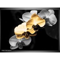 Glas schilderij Orchidee | Oranje, Zwart, Grijs