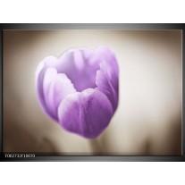 Glas schilderij Tulp | Paars, Grijs, Wit